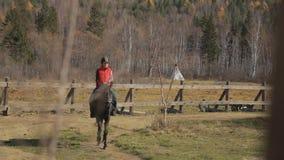 Kvinnan rider en häst i cirkelvägen av paddocken Det traskade tamdjuret går i stillhet lager videofilmer