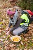 Kvinnan samlar kantareller i skogen Arkivbild