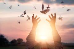 Kvinnan som ber och, frigör fåglarna till naturen på solnedgångbakgrund Royaltyfri Foto
