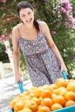 Kvinnan som skjuter skottkärran, fyllde med apelsiner Royaltyfria Bilder
