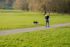 Kvinnan som spelar för att hämta bollen med hennes border collie hund i, parkerar royaltyfri fotografi