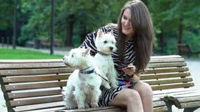 Kvinnan som talar med två djurhundkapplöpning som sitter på bänk parkerar in Statisk elektricitetskott stock video