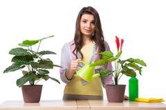 Kvinnan som tar omsorg av växter som isoleras på vit royaltyfria bilder