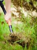 Kvinnan tar bort tr?det fr?n tr?dg?rden som gr?ver jord med skyffeln arkivfoto