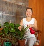 Kvinnan tar omsorg av inomhus växter Arkivfoton