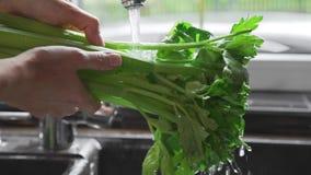 Kvinnan tvättar gräsplaner under tryckning av vatten på köket som gör salladen, nya gräsplannad-grönsaker, vitaminer och arkivfilmer