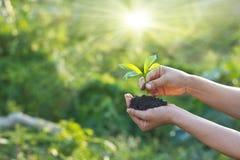 Kvinnan var att plantera som var nyfött i trädgårds- bakgrund Royaltyfria Foton