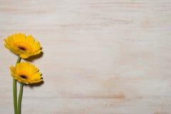 Kvinnans kortet för daghälsningen med guling blommar över träbackgro Fotografering för Bildbyråer