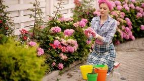 kvinnaomsorg av blommor i trädgård lycklig kvinnaträdgårdsmästare med blommor hydrangea Vår och sommar Växthusblommor stock video