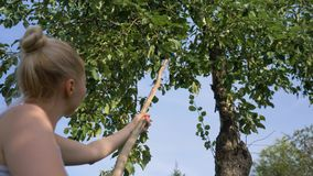 Kvinnaplockningäpplen från ett träd lager videofilmer