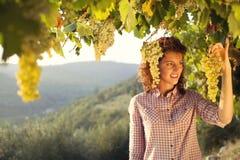 Kvinnaplockningdruvor under solnedgång tänder i en vingård royaltyfria foton