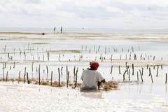 Kvinnaplockninghavsväxt på lågvatten arkivfoto