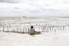 Kvinnaplockninghavsväxt på lågvatten royaltyfria foton