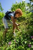 Kvinnaplockningjordgubbar Arkivfoto