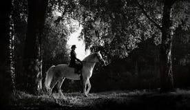 Kvinnaridning på en vit häst silhouette royaltyfria foton