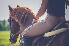 Kvinnaridning på häst royaltyfria foton