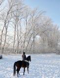 Kvinnaridninghäst i snö Arkivbild