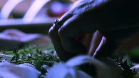 Kvinnas händer som väljer ny timjan för att laga mat lager videofilmer