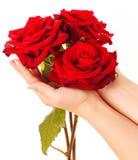 Kvinnas hållande bukett för hand av tre röda rosor Royaltyfria Bilder
