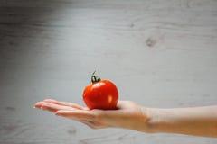 Kvinnas hand som rymmer den nya tomaten Arkivfoto