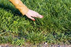 Kvinnas hand som trycker på gräset arkivbilder