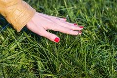 Kvinnas hand som trycker på gräset Arkivbild