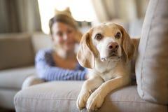 Kvinnasammanträde på soffan tar någon bra tid med hans hund royaltyfria bilder