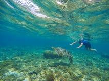 Kvinnasimning med havssköldpaddan Exotiskt havsdjur Tropisk aktivitet för ösemestersport Arkivbild