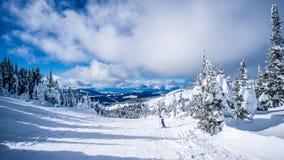 Kvinnaskidåkaren som tycker om landskapet och snön, täckte träd i det höga alpint skidar område på solmaxima Royaltyfri Foto