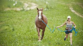 Kvinnaspring på fältet med en häst stock video