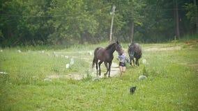 Kvinnaspring på fältet med en häst arkivfilmer