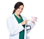 Kvinnatandläkareshow med tandprotesen Royaltyfri Fotografi