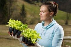 Kvinnaträdgårdsmästare som håller ögonen på hennes grönsallatplantor som förbereds att planteras på hennes trädgård royaltyfri foto