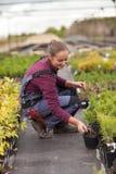 Kvinnaträdgårdsmästaren transplanterar och organiserar om inlagda växter, Arkivbild
