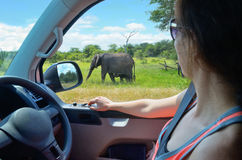 Kvinnaturist på safaribilsemester i Sydafrika som ser elefanten i savannah Royaltyfri Foto