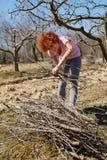 Kvinnavår som gör ren fruktträdgården Royaltyfria Bilder