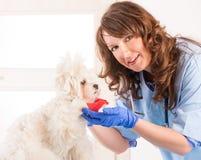 Kvinnaveterinär med en hund arkivfoto