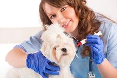 Kvinnaveterinär som rymmer en hund arkivbild