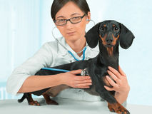 Kvinnaveterinären är den lyssnande hunden i klinik Royaltyfri Fotografi