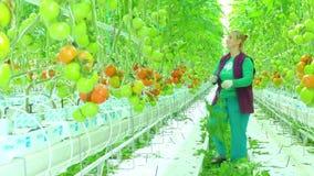 Kvinnlig arbetare i växthus lager videofilmer