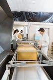 Kvinnlig Beekeeper Working On Honey Extraction Plant Arkivfoto