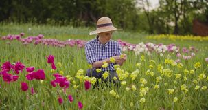 Kvinnlig bonde Examining Pink Tulip Flowers At Field stock video