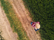 Kvinnlig bonde som använder den digitala minnestavladatoren i grönt vetefält arkivbild