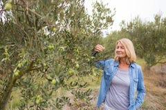 Kvinnlig bonde som kontrollerar ett träd av oliv royaltyfri foto
