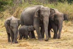 Kvinnlig elefant med suga för behandla som ett barn Fotografering för Bildbyråer