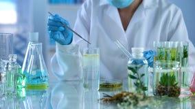 Kvinnlig forskare som experimenterar med växtextrakter, kroppomsorglotioner, arom arkivbilder