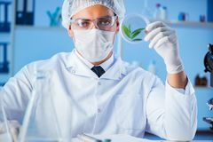 Kvinnlig forskareforskare som för ett experiment i en labora royaltyfri bild