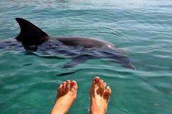 Kvinnlig fot i vattnet mot bakgrunden av en fri delfin som svävar för kustdelfin i för havet, Röda havet reven till Israel arkivbilder