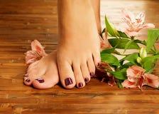 Kvinnlig fot på brunnsortsalongen på pedikyrtillvägagångssätt Royaltyfria Bilder
