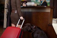 Kvinnlig gäst med hunden på hotellmottagandet royaltyfria foton